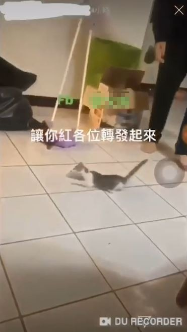 小貓最後無力趴地。(圖擷取自影片)