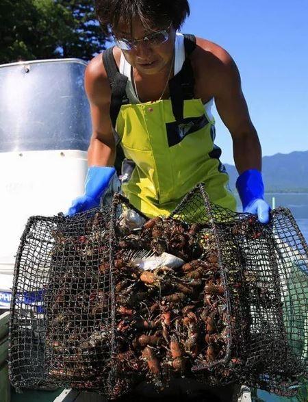 日本人不吃小龍蝦,除了極少部分被當成食材,其他大量都被漁民當場「人道毀滅」,直接踩碎當成肥料,小龍蝦對當地漁民的收入僅佔4%。(圖擷自3g.163.com)