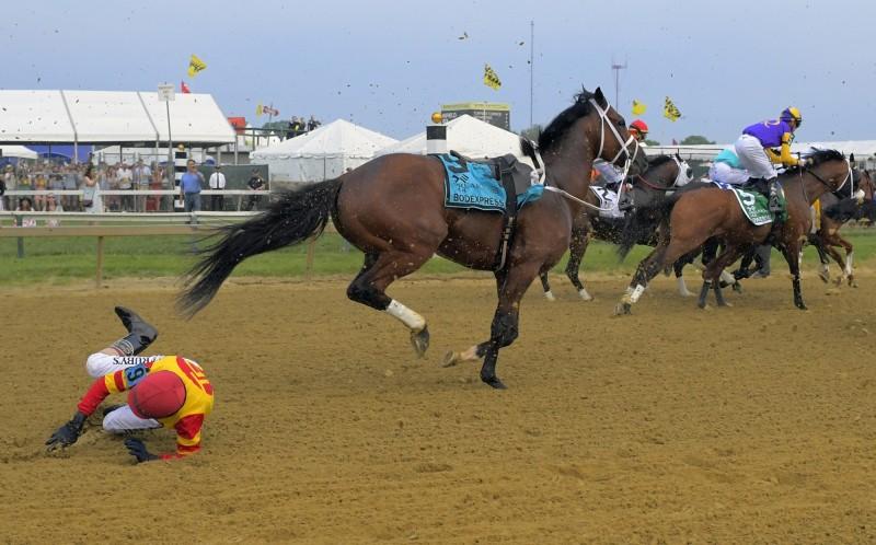 美國賽馬Bodexpress搶走所有的鎂光燈,因為牠一出閘門就甩掉騎師獨自狂奔。(美聯社)
