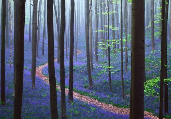 第四名比利時的森林。(圖擷取自BoredPanda)