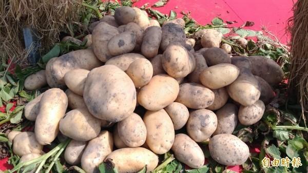 食藥署認為,馬鈴薯應避免陽光照射,低溫貯藏。(資料照)