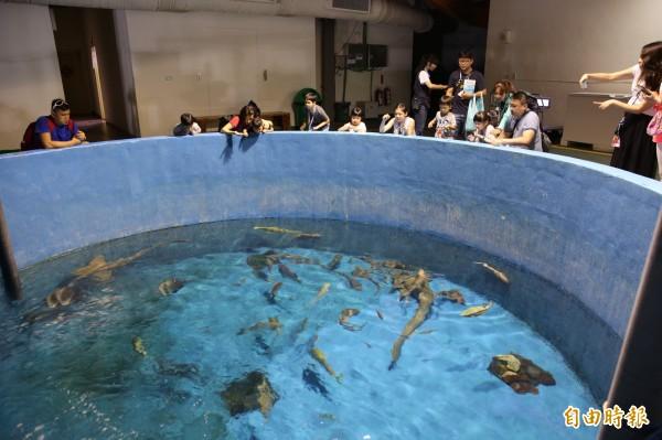 夜宿海生館的後場導覽活動,還可體驗餵魚的樂趣。(記者潘自強攝)