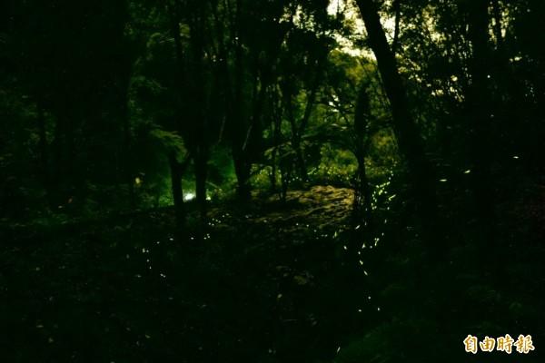 新竹縣峨眉鄉昨晚的賞螢活動,有1大1小被枯樹壓傷,其中1歲多的男童顱內出血嚴重。圖為新竹縣螢火蟲一景,與本新聞無關。(資料照,記者黃美珠攝)
