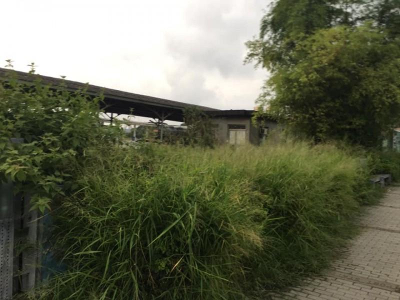 前高雄市政府秘書處長陳瓊華沒有透過「打韓小組」,直接在個人臉書PO出3張風景區雜草叢生的照片,要韓國瑜記得除草。(擷取自Chiung-hua Chen臉書)