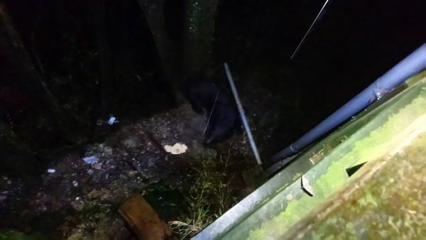 天馬登山隊除了直呼黑熊偷食物的樣子好可愛,也藉此呼籲,一般黑熊是會遠離人類的的活動區域,若是在登山途中遇見要特別留意,以免被當成是牠的競爭者。(圖由天馬登山隊提供)