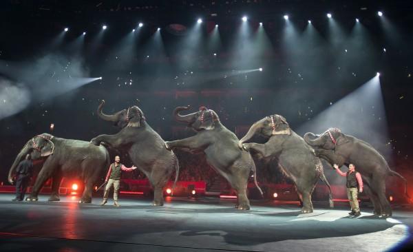 美國玲玲兄弟與伯納貝利馬戲團宣布將在未來3年內逐步取消大象表演。(美聯社)