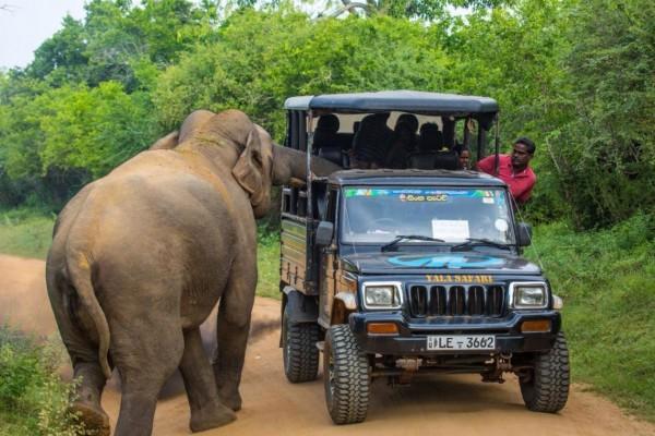 一輛滿載遊客的公園遊覽車遇到一頭大象,大象好奇走近車子,車上乘客也興奮拍照。(圖擷自twitter)