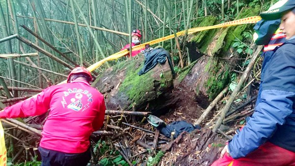 Chiayi County Rescue Association volunteers work to retrieve the body of a 48-year-old man, surnamed Liu, from inside a hollow camphor tree on Sunday. Photo: CNA, courtesy of the Chiayi County Rescue Association