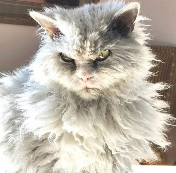 美國一隻名為Albert的10歲小白貓的照片最近在社群網站上被大家瘋傳。(圖擷自IG)