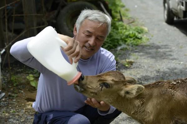 日本311大地震滿4週年,福島核災警戒區內松村直登仍獨自一人守在富岡町,餵食動物,和動物一起生活,不離不棄。(圖擷自《Naoto Matsumura》臉書)
