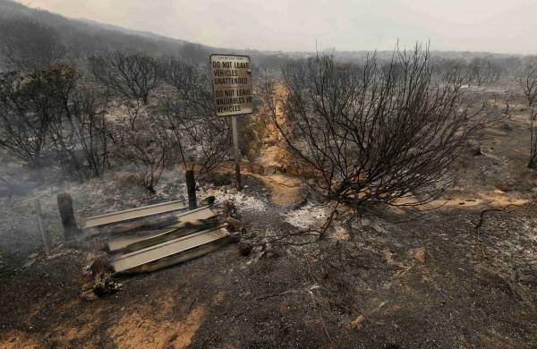 許多地區已被大火燒個精光,數千英畝珍稀植物慘被燒毀。(路透)