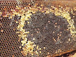 農藥殺了蜜蜂?