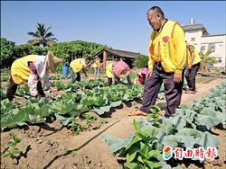 老人助老人 社內社區厝邊相招來種菜