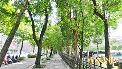 松菸護樹團體不滿移樹 國父紀念館全區提報文化景觀