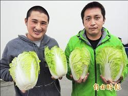 高冷蔬菜低價賣 小農嘆無奈