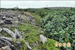 2萬噸漂流木棄置 環團批政府帶頭亂
