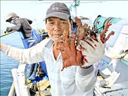 中國漁船侵門踏戶濫捕珊瑚 罰不怕