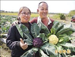 三星彩色花椰菜 免費提供當捧花