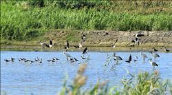 限制經濟發展 濕地保育缺財源