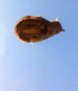 採光罩上曬太陽 貓咪肉墊屁股全現形