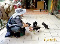收養200隻貓狗 周媽歡喜做