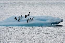 融冰危機!南極冰棚200年後將只剩一半