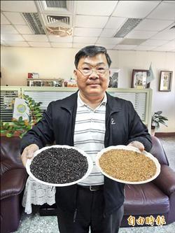 新種紅、黑米 容易栽種產量高