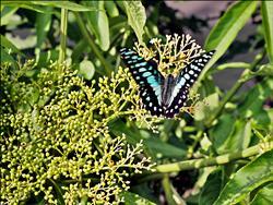 八仙山百蝶生態 專家帶觀賞