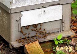 城市養蜂社企 環保又可獲利