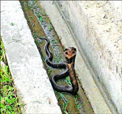 大漢溪單車道有眼鏡蛇 踏青小心