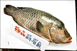 台灣海鮮選擇指南