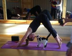 收容所貓咪 同作瑜珈好快樂