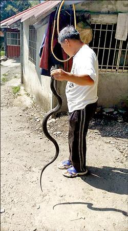 宰殺保育類眼鏡蛇 貼上網被撻伐