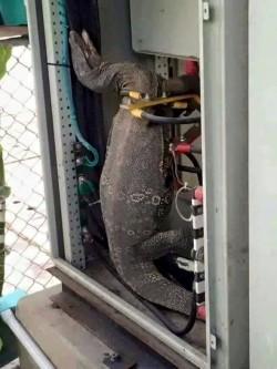 恐龍在電箱裡被電死? 網友狠打臉