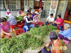 分享消暑青草茶 寺廟30年不斷