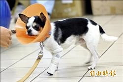3D列印義肢 狗狗不再跛腳
