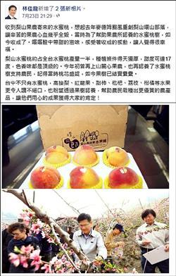 梨山水蜜桃收成 台中市長臉書分享好滋味