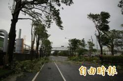 苗栗縣倒了近7000棵路樹 復原時間恐花1個月