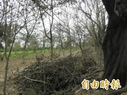 颱風樹倒數萬株 雲林垃圾量再拉警報