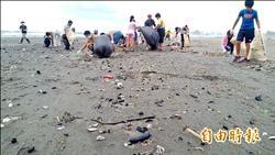 四鯤鯓海灘 電子廢棄物綿延1公里