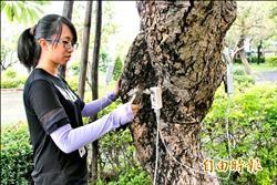 百年老樹有恙 針灸、超音波抓病灶