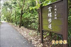 土城大安圳賞蝶步道 生態秘境