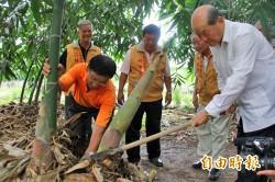 嘉縣林班地風損補助提高 筍農鬆口氣