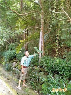 退休師努力造林 擬建木頭博物館