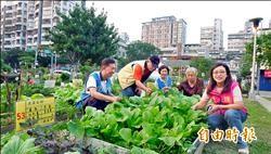 國防部閒置地規定綠化 只能種花禁止種菜