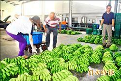 香蕉批發價漲 每百公斤近六千元