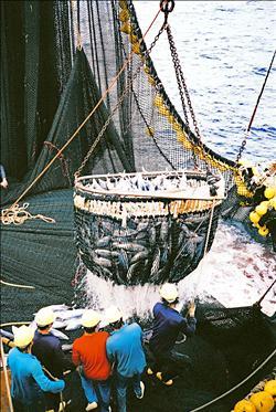遠洋漁業紀錄片《海上情書》 特映動人心
