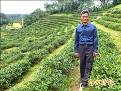 茶農子弟堅持有機 重振「阿里磅紅茶」