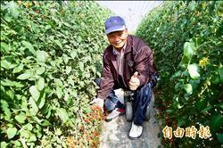 種有機玉女小番茄 老農重質不重量