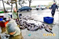 漁損逾兩億 虱目魚破億最嚴重